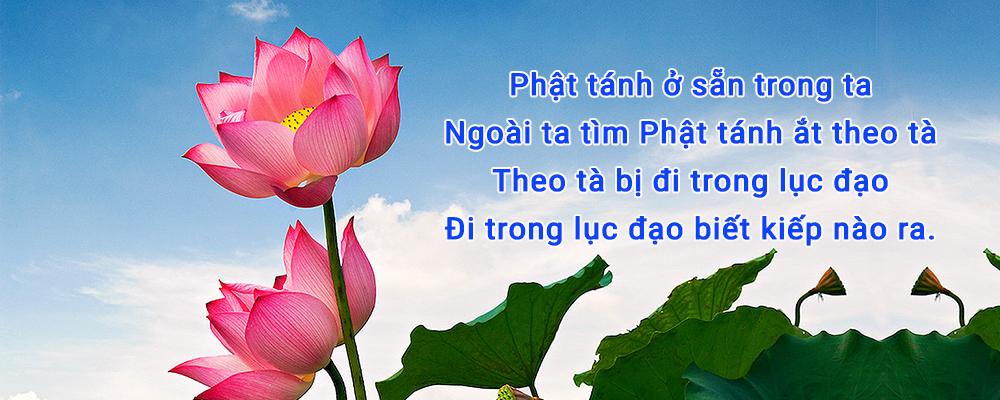 dao-Phat-thien-tong